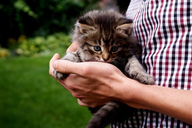 nafouknutá velká kočička niude holka